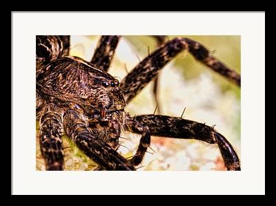 Arachnophobia Framed Prints