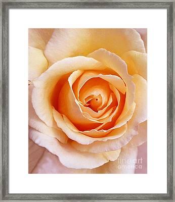 Aranciata Rose Blossom Framed Print
