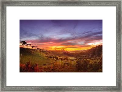 Araucaria Vale Framed Print by Miguel Santos