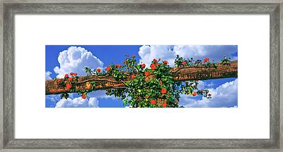 Arbor And Spreading Rose, Temecula Framed Print by Panoramic Images