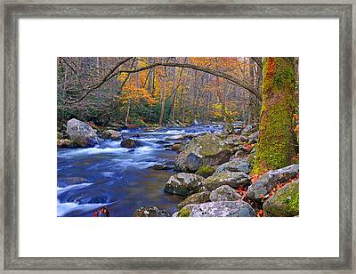 Arboreal Arch Over Big Creek Framed Print