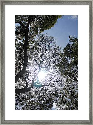 Arboreal Filigree Framed Print by Craig Wood