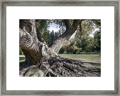 Arboretum Tree Framed Print by Daniel Hagerman