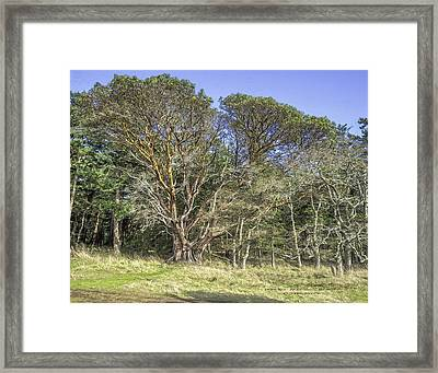 Arbutus Beauty Framed Print by John Moore