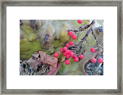 Arbutus Berries Framed Print