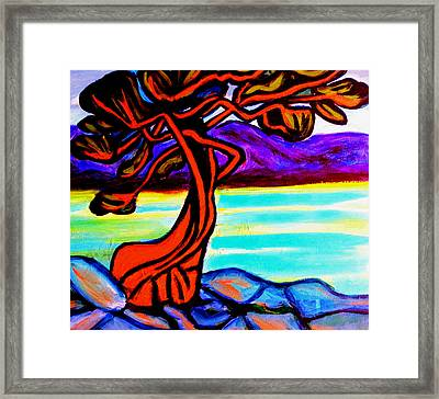 Arbutus Tree 1 Framed Print