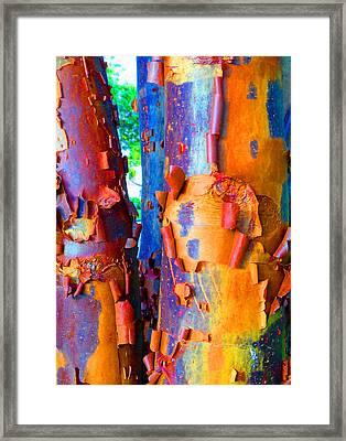 Arbutus Tree Summer Framed Print by Laurie Tsemak