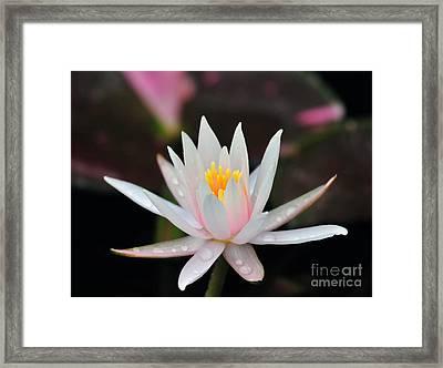Arc-en-ciel Water Lily Framed Print