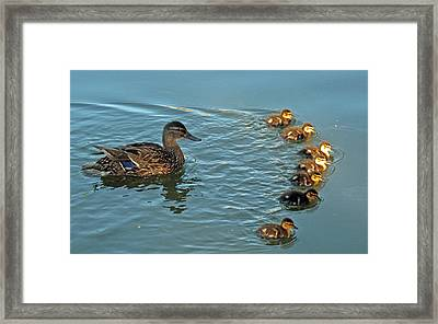 Arch Of Ducklings Framed Print