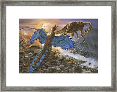 Archaeopteryx Defending Its Prey Framed Print by Jan Sovak