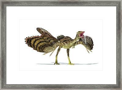 Archaeopteryx Dinosaur Framed Print by Leonello Calvetti