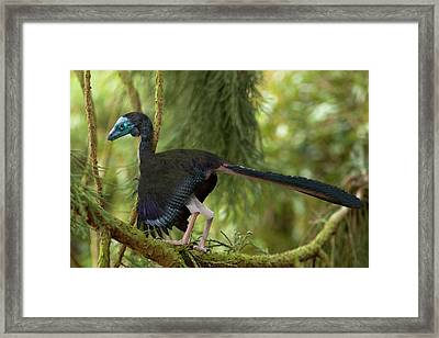 Archaeopteryx Photographic Reconstruction Framed Print