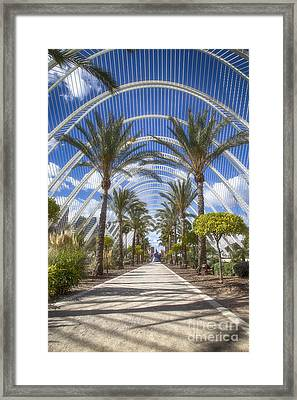 Arche With Palmtrees Framed Print