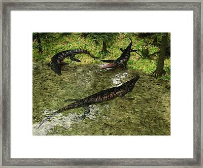 Archegosaurus Amphibians Framed Print