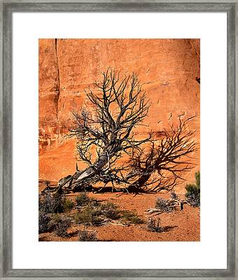 Arches Tree Framed Print