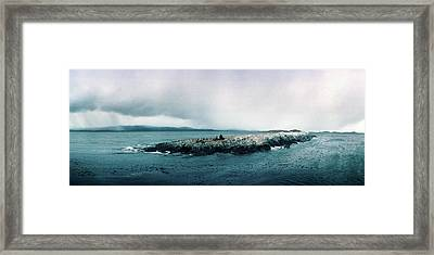 Arctic Birds And Sea Lions Framed Print by Panoramic Images