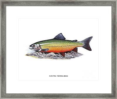 Arctic Char Male Framed Print