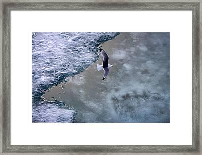 Arctic Flight Framed Print
