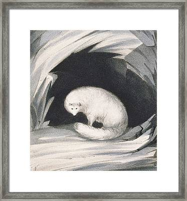 Arctic Fox, From Narrative Of A Second Framed Print by Sir John Ross