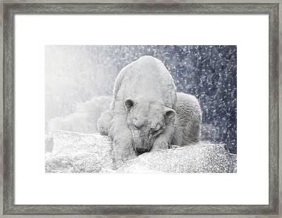 Arctic Giant Sleeping Framed Print by Joachim G Pinkawa