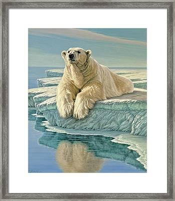 Arctic Heir Framed Print by Paul Krapf