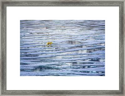 Arctic Journey Framed Print