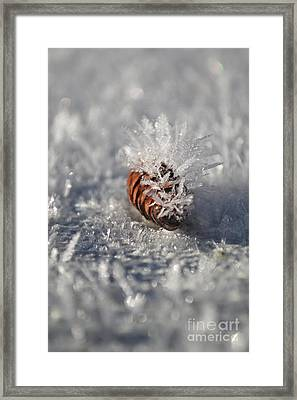 Arctic Pine Cone Porcupine Framed Print