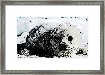Arctic Treasure Framed Print by Shere Crossman