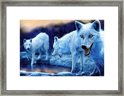 Arctic White Wolves Framed Print by Mal Bray