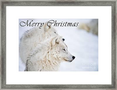 Arctic Wolf Christmas Card 12 Framed Print