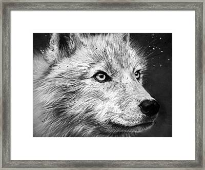 Arctic Wolf Framed Print by Sharlena Wood