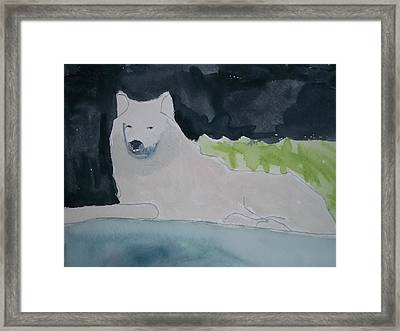 Arctic Wolf Watercolor On Paper Framed Print by William Sahir House