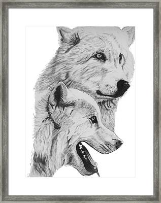 Arctic Wolves Drawing Framed Print by Catherine Roberts