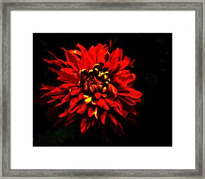 Arcylys Framed Print by Norman Johnson
