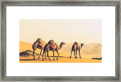 Are We Lost  Framed Print by Ahmed Rashed
