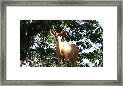 Are You A Friend Framed Print