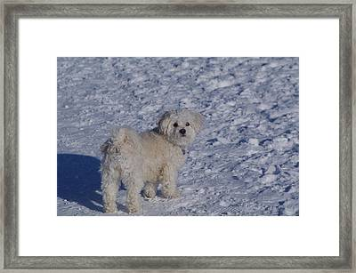 Framed Print featuring the photograph Are You Coming? by Sheila Byers