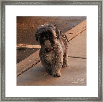 Are You Coming Framed Print by Theresa Davis