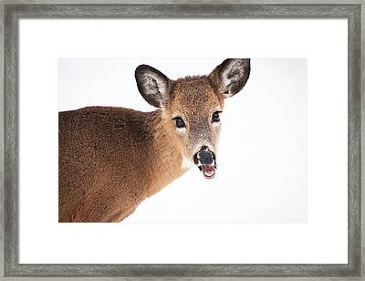 Are You Done Taking Pictures Framed Print by Karol Livote