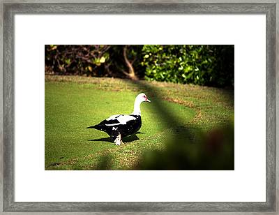 Are You Following Me Framed Print by Milena Ilieva