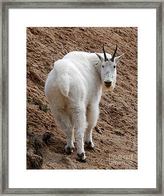 Framed Print featuring the photograph Are You Following Me by Vivian Christopher