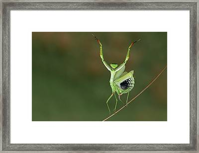 Are You Gonna Dance With Me ? Framed Print