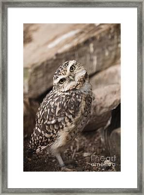 Are You Looking At Me? Framed Print by Anne Gilbert