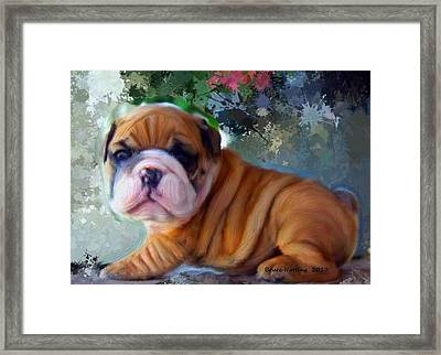 Are You Looking At Me Framed Print by Bruce Nutting