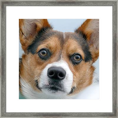 Are You Looking At Me Framed Print by Mike McGlothlen