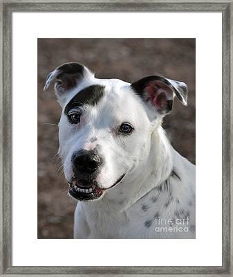 Framed Print featuring the photograph Are You Looking At Me? by Savannah Gibbs