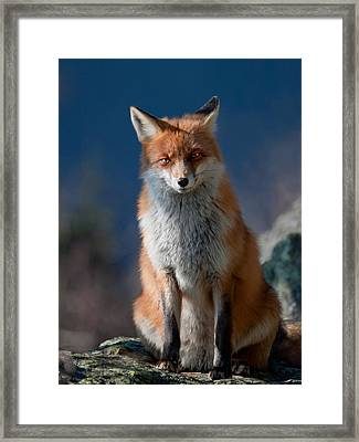 Are You My Friend Or Not? Framed Print