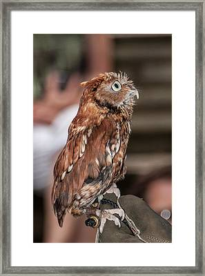 Framed Print featuring the photograph Are You My Mother by John Haldane