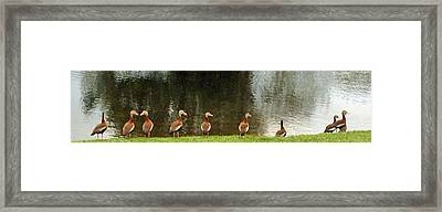 Are You Sure They Look Like Us? Framed Print by Jim Hubbard