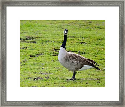 Are You Talking To Me Framed Print by Barbara Snyder